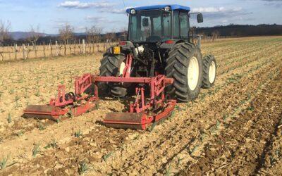 Vero Aglione della Valdichiana sul sito del partenariato europeo per l'innovazione Eip-Agri