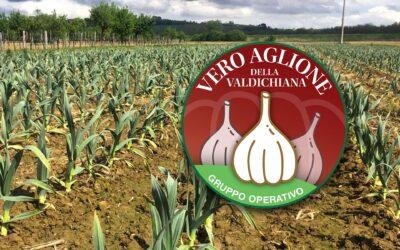 Aglione. Il video completo del webinar del Gruppo Operativo VAV, 25 gennaio 2021